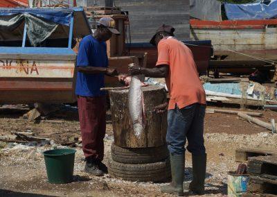 Cayenne : Pêcheurs